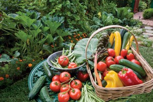 harvest_basket