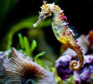 Rainbow-colored-seahorse